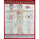 Tibetischer Medizin Yoga Thangka  Nr. 3 ca. 40 x 49cm